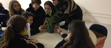 Monitores Ecológicos aprendem sobre Plantas Carnívoras